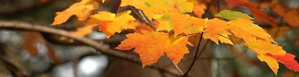 cropped-leaves1.jpg